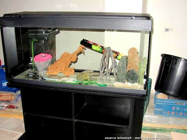 Aquarium poisson occasion