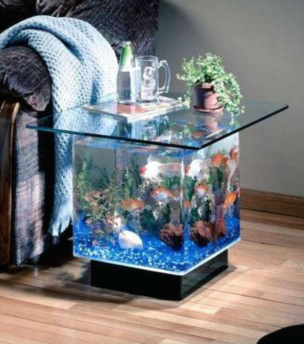 Table basse aquarium animalis
