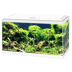 Vente aquarium complet