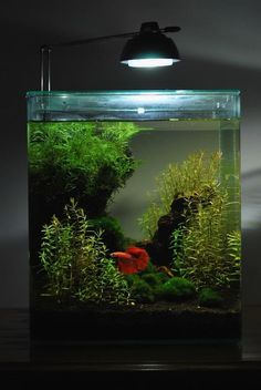 Aquarium en forme de table