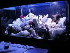 Aquarium marin à vendre
