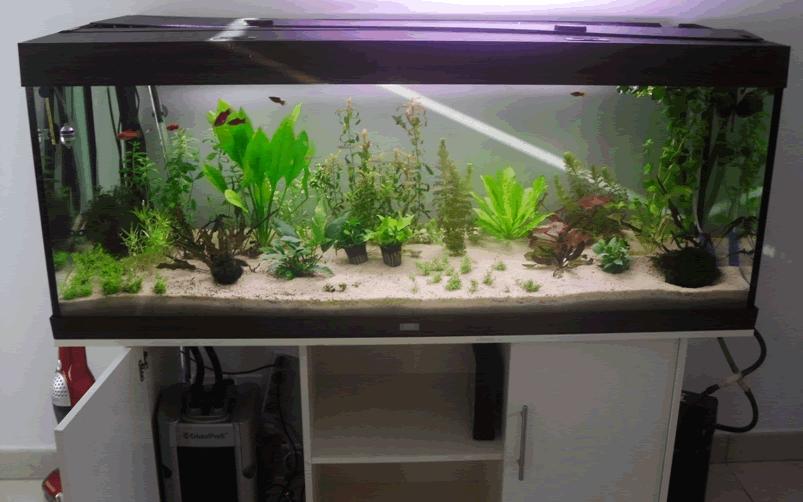 Accessoire aquarium occasion