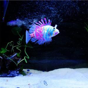 Vente poisson aquarium pas cher
