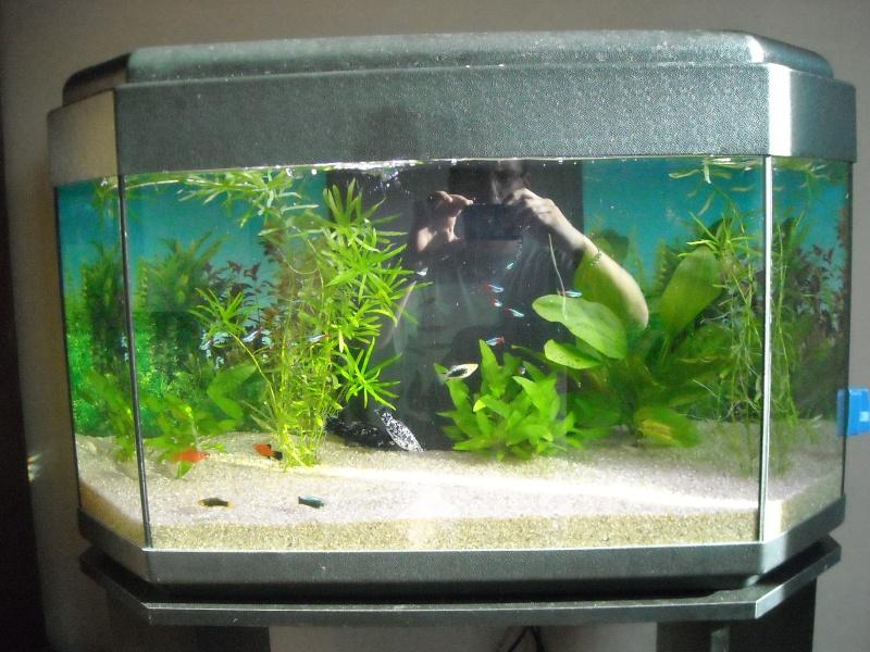 Pompe aquarium gamm vert