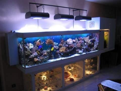 Prix aquarium 250 litres