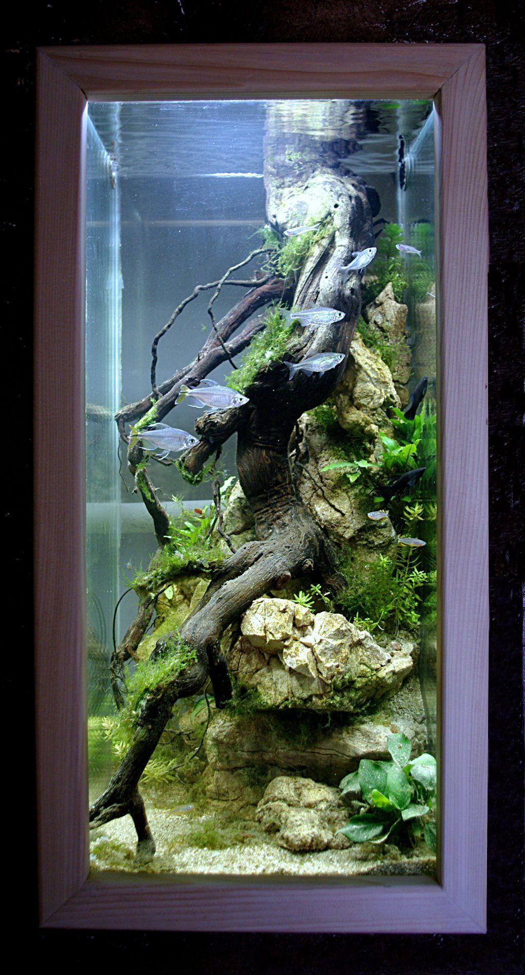 Aquarium en forme de colonne