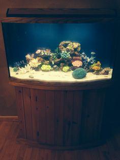 Aquarium 1m sur 30 cm