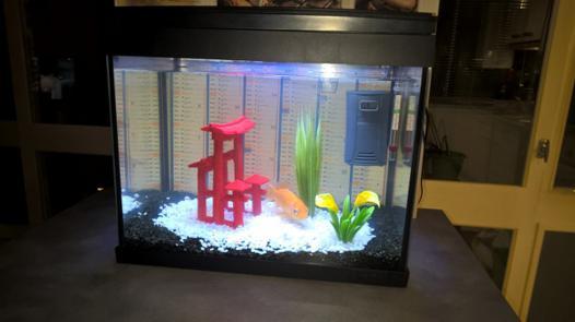 Prix aquarium pour poisson rouge