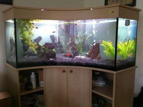 Cherche aquarium a vendre