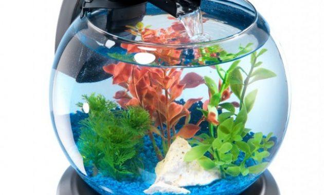 Aquarium a vendre ou a donner