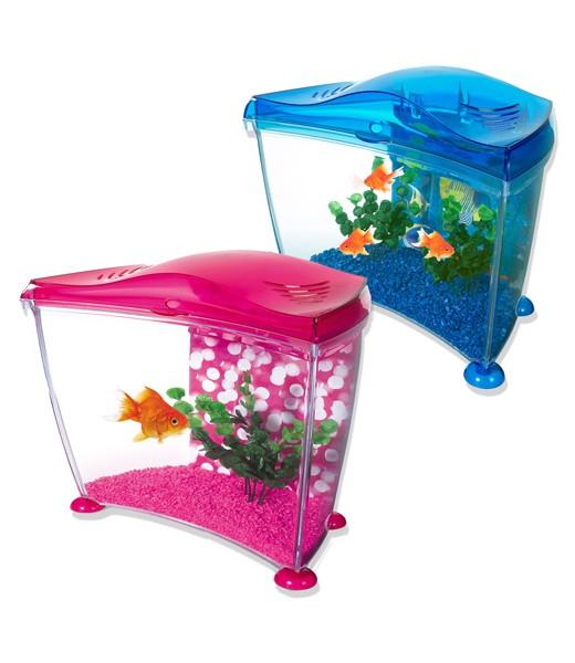 Vente aquarium poisson rouge