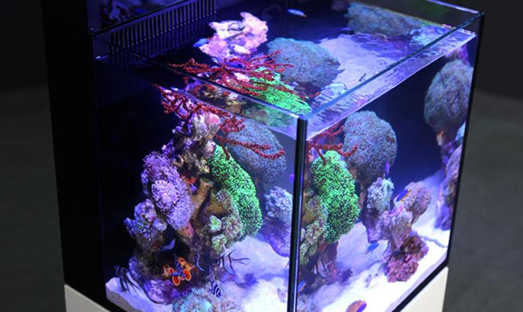 Aquarium 20 euros
