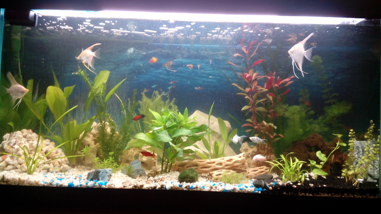 Un petit aquarium