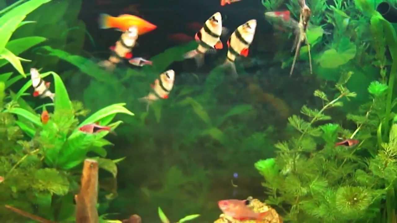Aquarium eau chaude pas cher