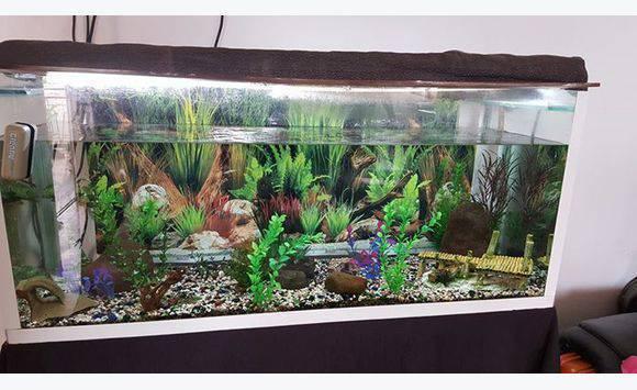 Aquarium pas cher 30l