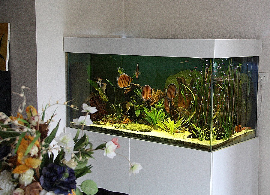 Aquarium design a vendre