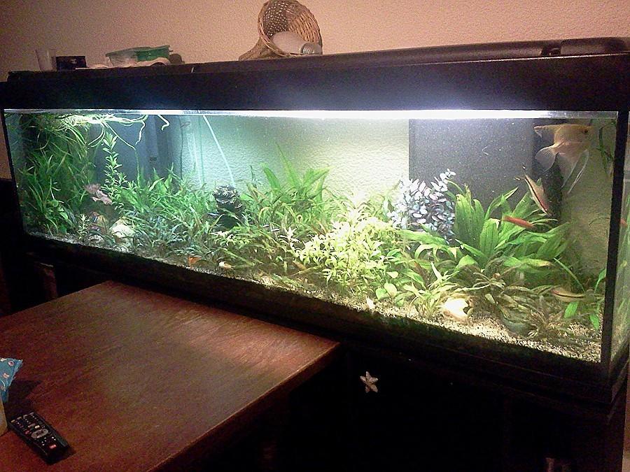 Petit aquarium a vendre