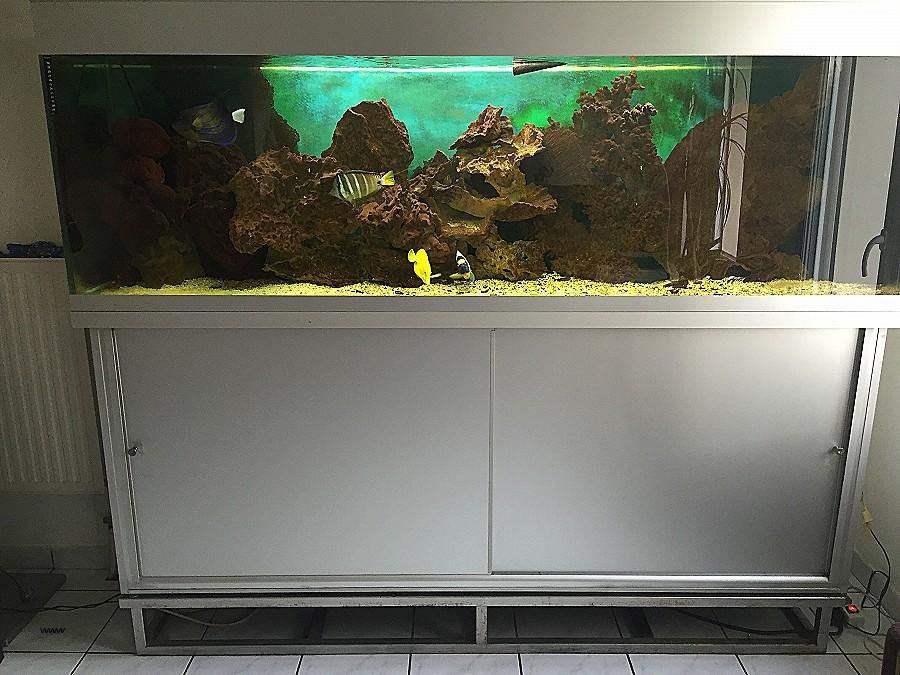 Grand aquarium a vendre