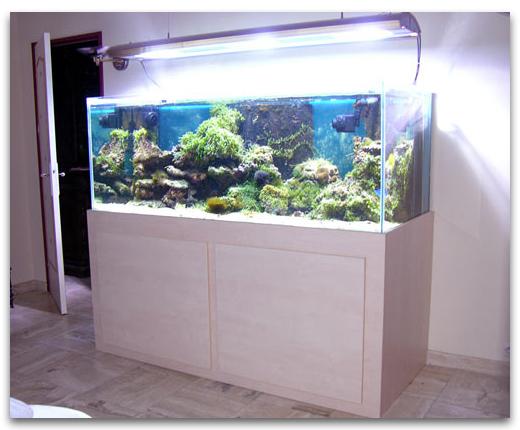 Aquarium eau douce a vendre
