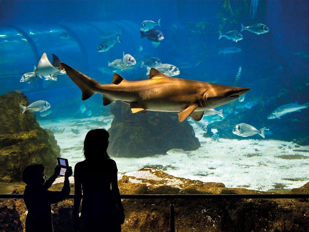 Aquarium de 2 metres