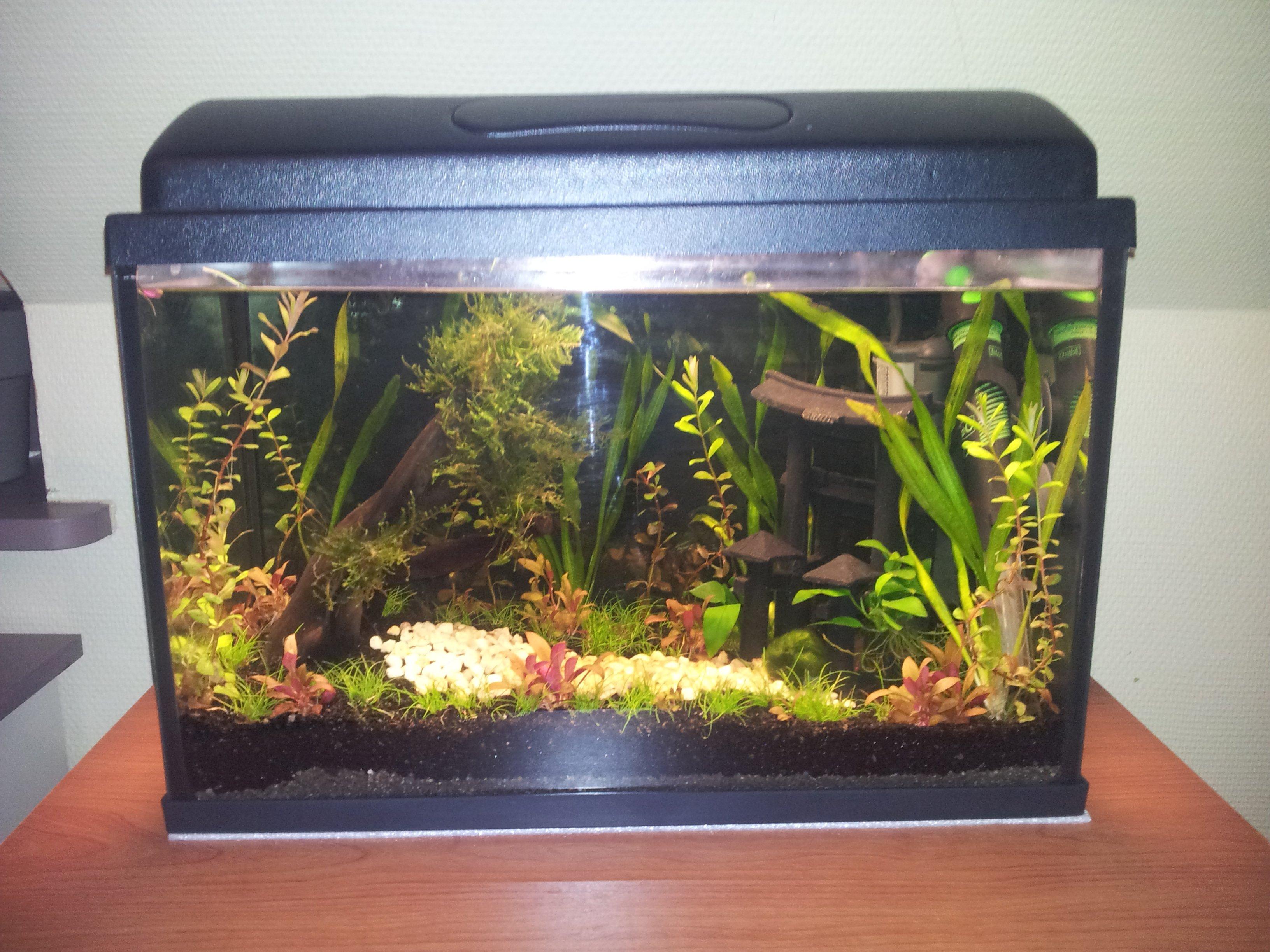 Poisson pour nano aquarium 20 litres
