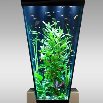Acheter un aquarium complet