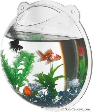 Aquarium design poisson rouge