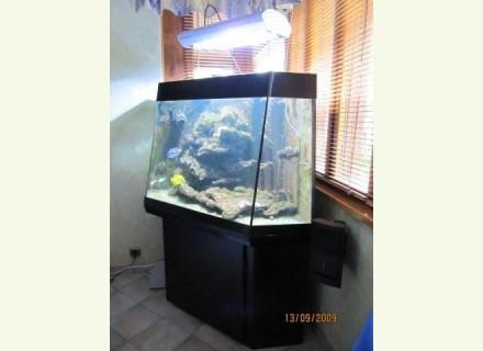 Aquarium a vendre occasion