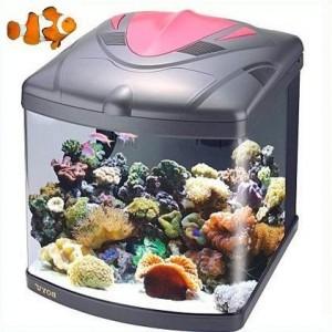 Petit aquarium eau de mer