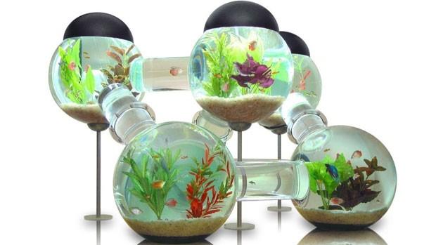 Aquarium pas cher pour poisson rouge