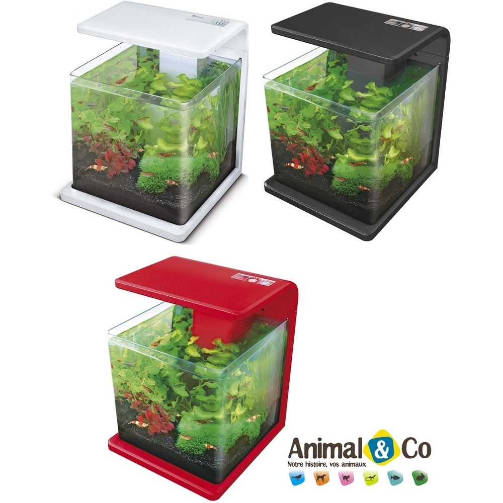 Aquarium pour poisson combattant pas cher