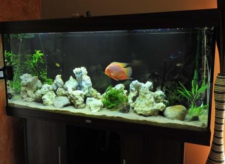 Aquarium occasion 300l