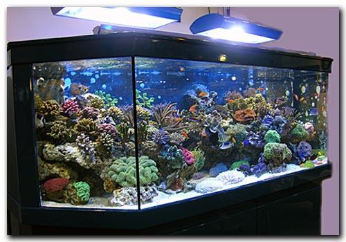 Aquarium 300 litres a vendre