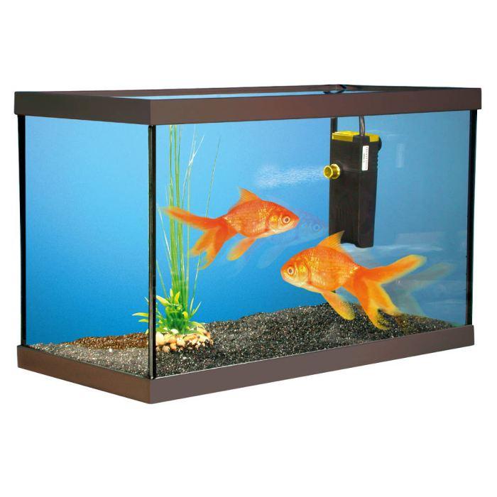 Kit aquarium poisson rouge