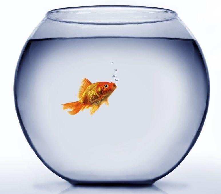 Bocal a poisson rouge pas cher