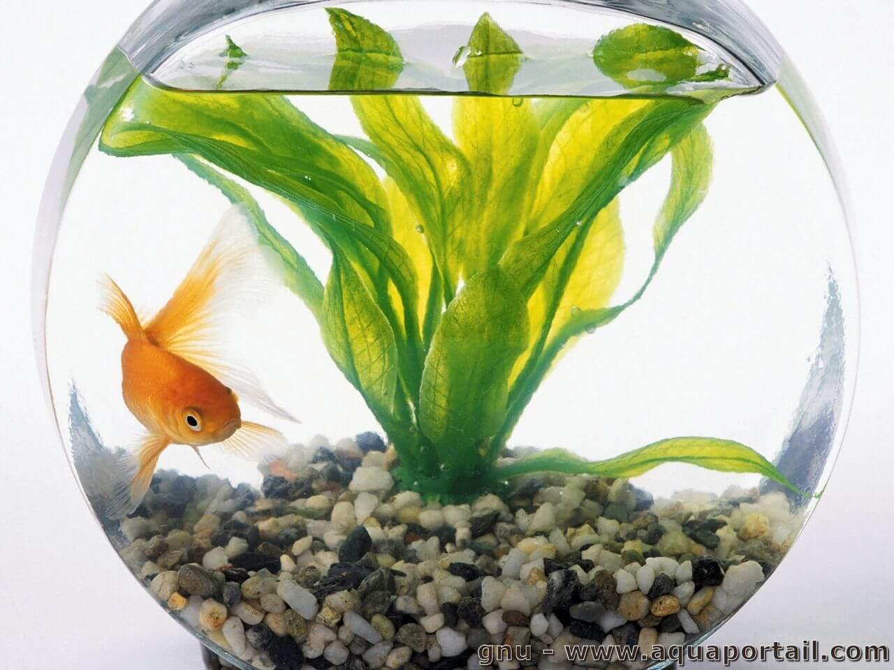 Prix des aquarium pour poissons