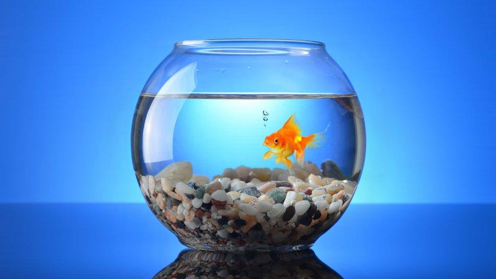 Acheter aquarium poisson rouge