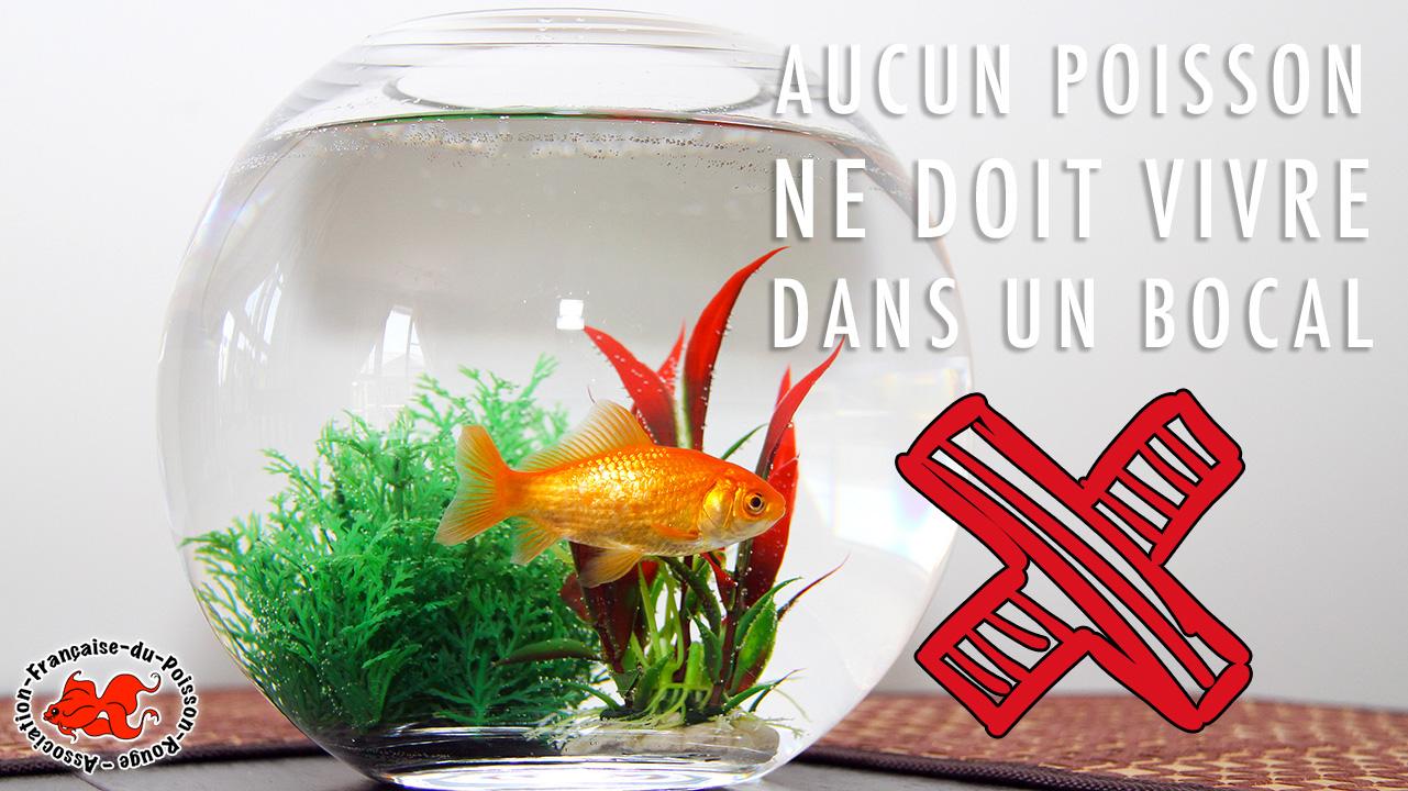 Bocal poisson rouge pas cher