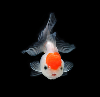 Achat bocal poisson