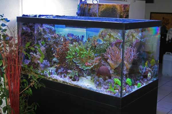 Aquarium 500 litres prix