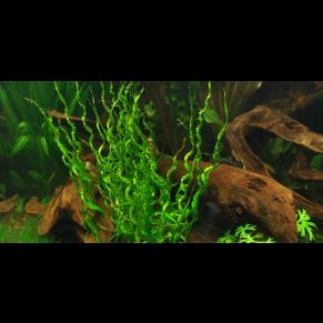 Aquarium toulouse vente