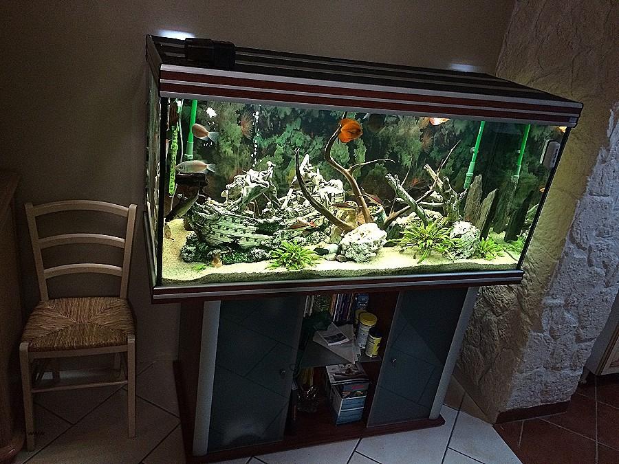 Aquarium belgique occasion