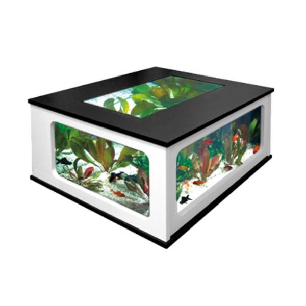 Aquarium acheter en ligne