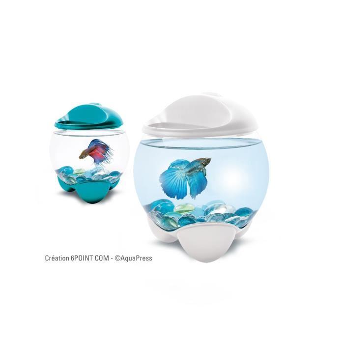 Petit aquarium design pour combattant