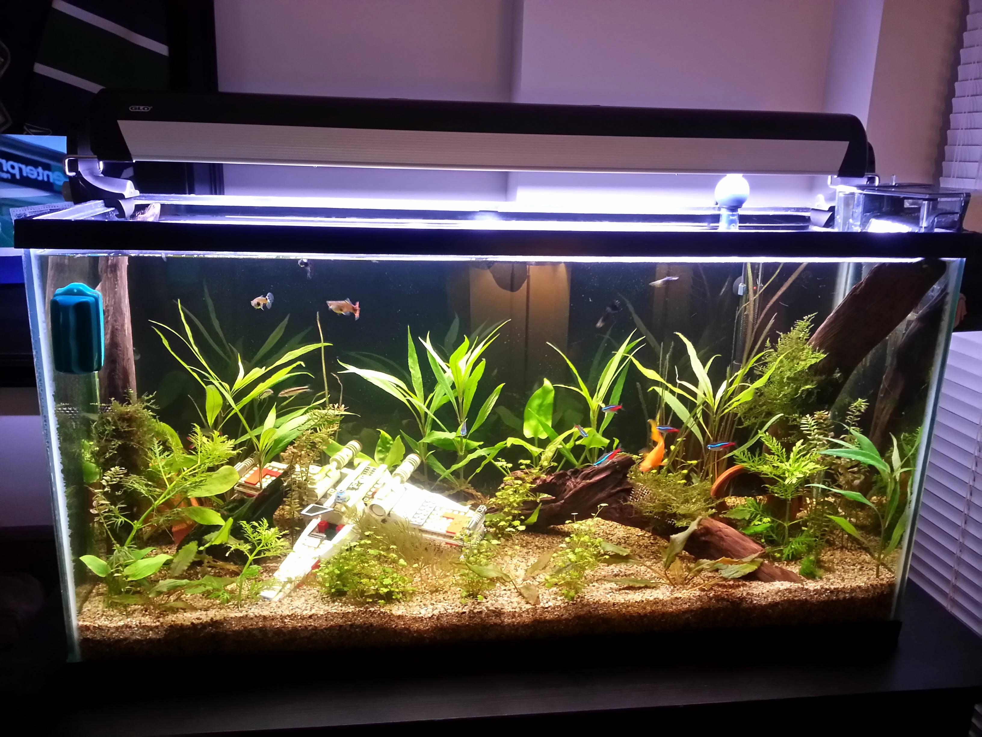 Aquarium de maison pas cher