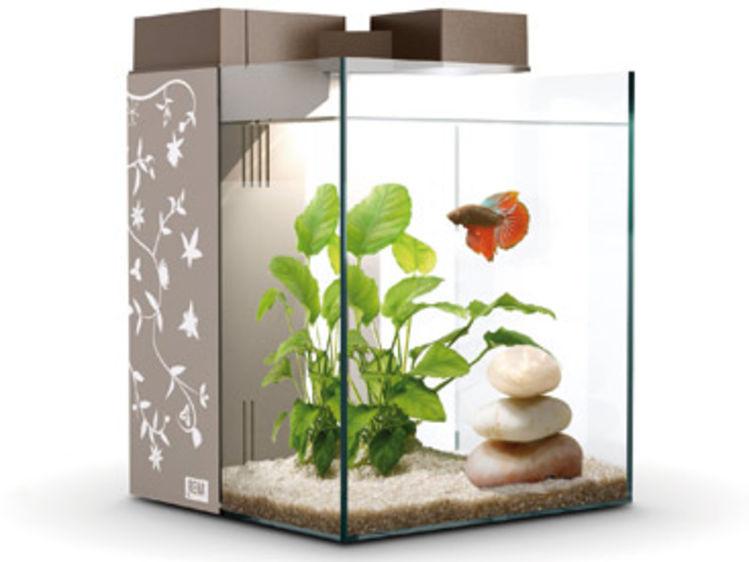 Poisson pas cher aquarium