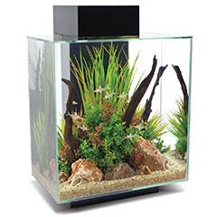 Gamm vert aquarium